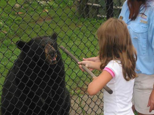 Ashley Feeding the Bears