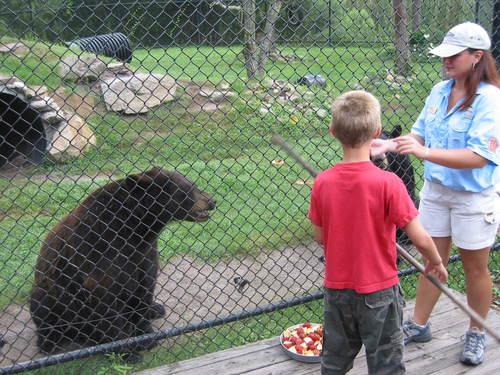 Brandon Feeding the Bears